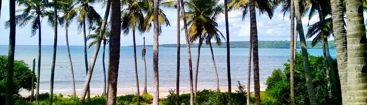 Coconut trees view on the Indian ocean and beach at Lindi with Eco2 Diving Mtwara Tanzania