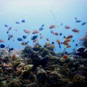 School of fish orange and dark over corals underwater in mikindani bay mtwara south tanzania