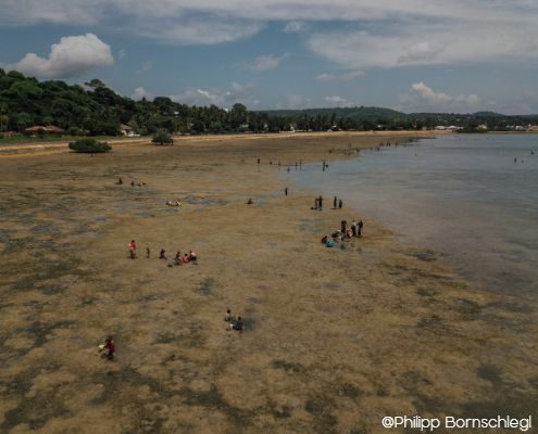 Drone view from the sky of the mikindani bay at low tides with locals gathering marine shells in mtwara tanzania
